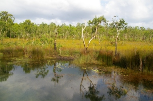 Tiwi wetland, Photo: Bill La Marca