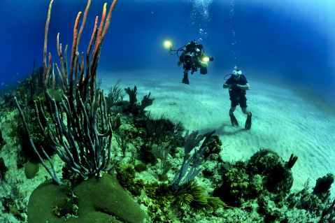 divers-scuba-reef-underwater-37542.jpeg